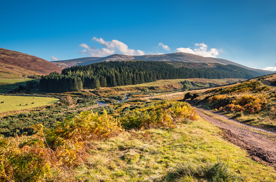 College Valley and The Cheviot