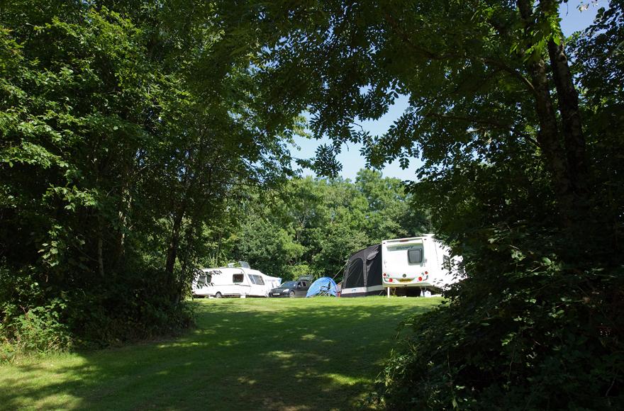 Trees at Modbury site