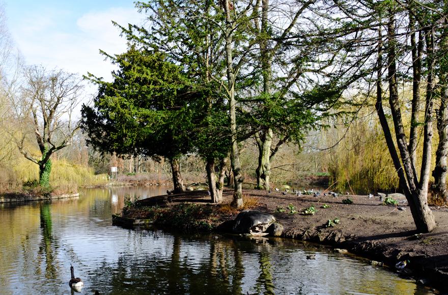 Woodland river bank