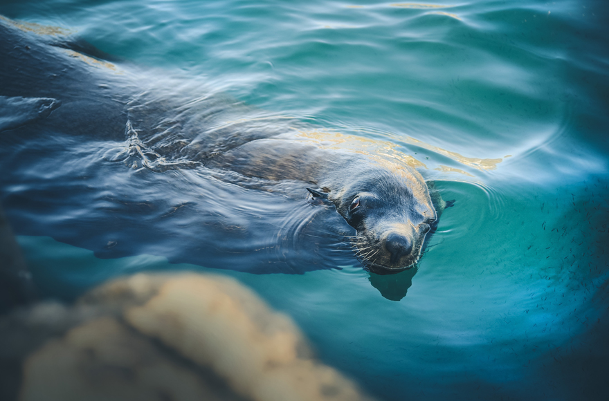 Seal at the Oceanarium
