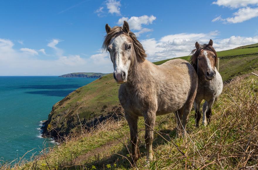 Newport coast ponies