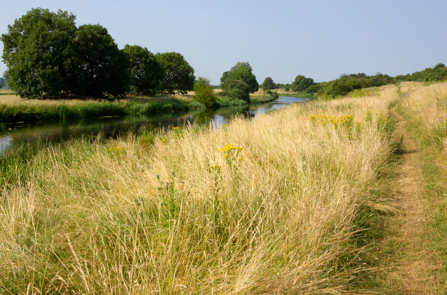 Peaceful green landscape at Ferry Meadows