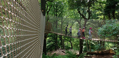 Take a canopy walk through RSPB Coombes Valley