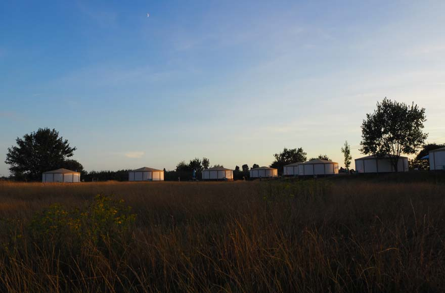 Eight yurts lined up against the trees and shrubs in the low light of the setting sun