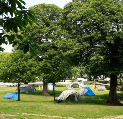 Group of tents in tree-lined grassy area
