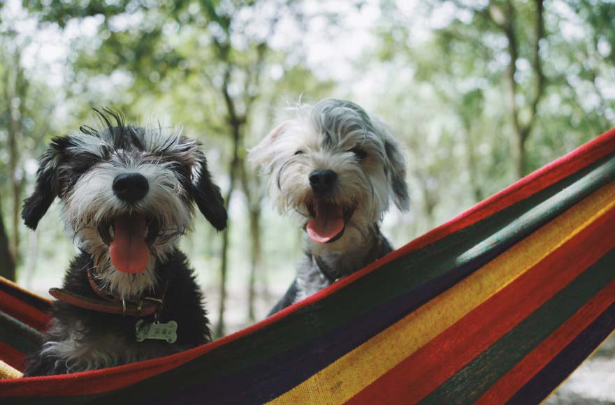 Two dogs sitting in a hammock in the woods