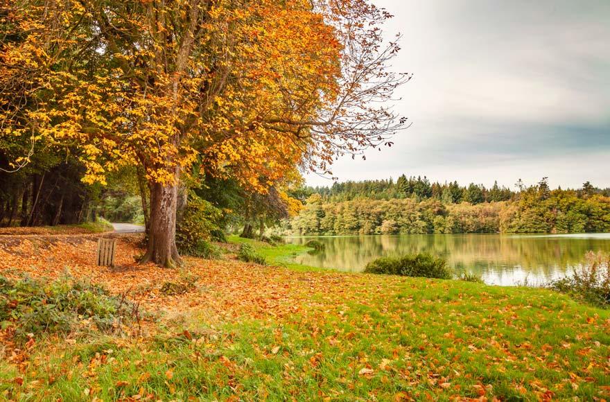 Take a stroll by Shearwater Lake