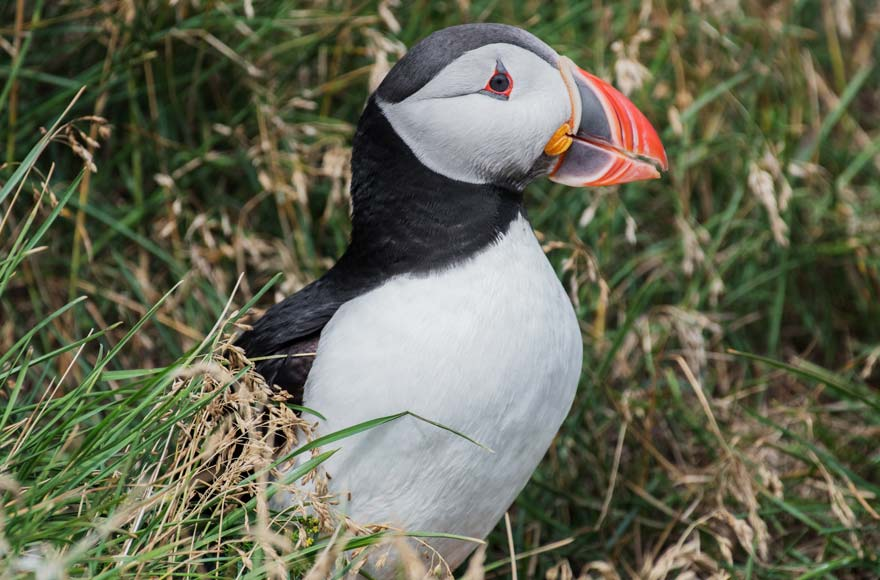 See beautiful wildlife like Puffins at the Mull of Galloway Nature Reserve
