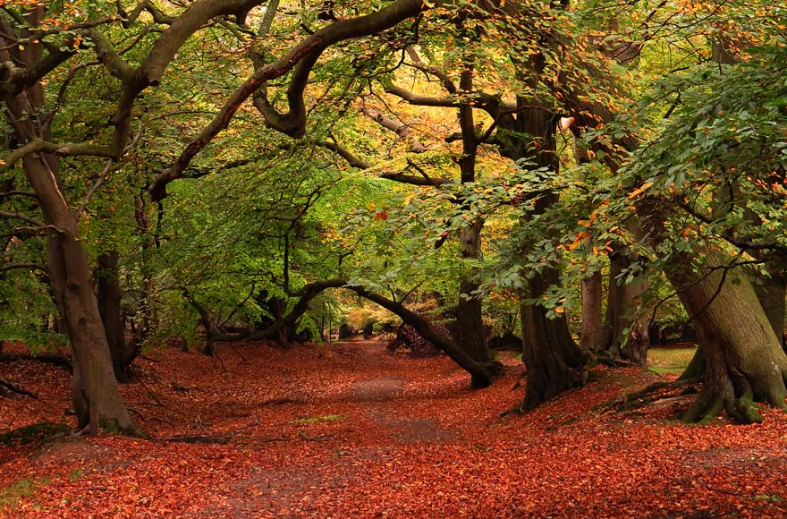 Changing leaves in Hertfordshire
