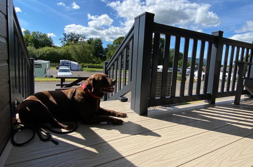 Dog sitting on decked porch of glamping cabin